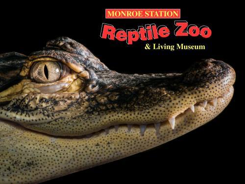 Reptile Museum